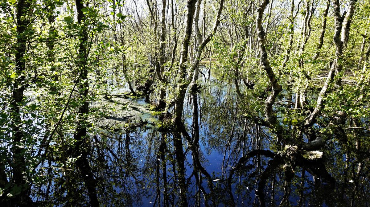 Mystische Wasserflächen