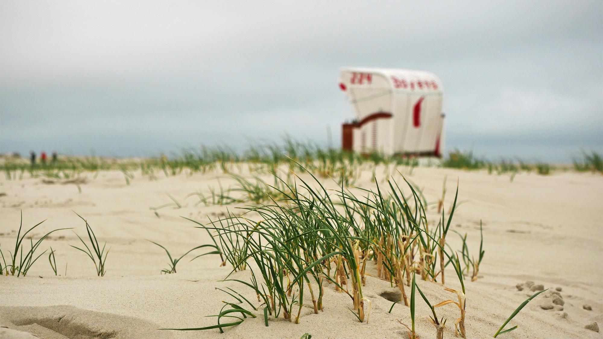 Dünengras und Strandkorb
