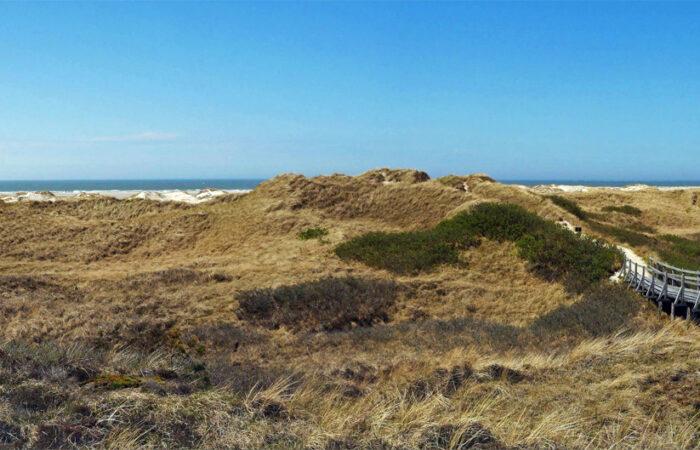 Die Bohlenwege auf Amrum – mitten durch die Dünen